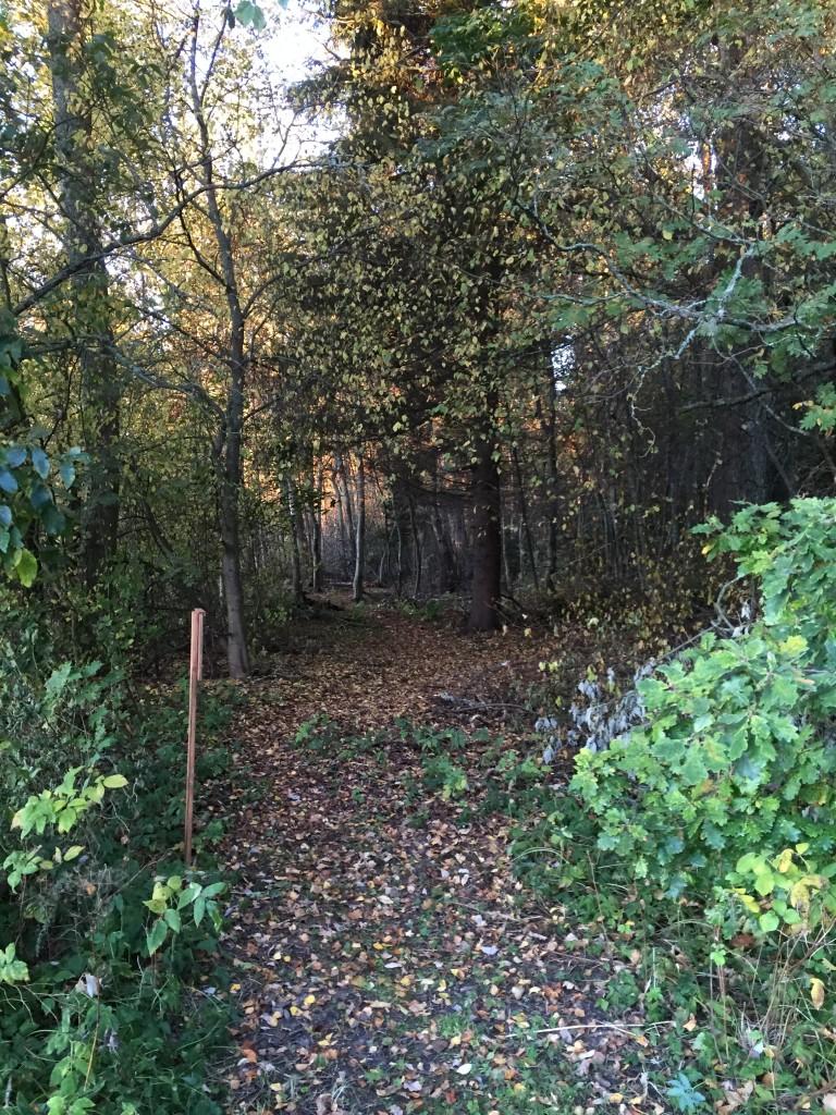 LuontopolkuRuukinpuisto