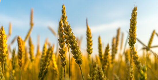 Hyvä maan kasvukunto – viljelijän ja vesistöjen etu