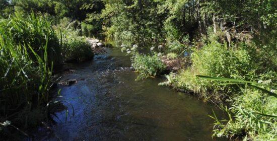 Hinnerjoen jokiuoman ja ranta-alueen kokonaisvaltainen kehittäminen