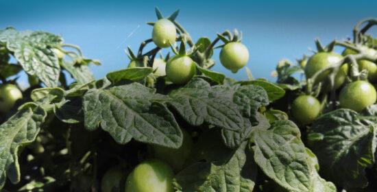 Omavaraistaloudesta valmisruokiin. Elintarviketalouden kehitys ja innovaatioiden leviäminen Satakunnassa
